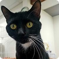 Adopt A Pet :: Camilla - Plainville, MA