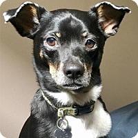 Adopt A Pet :: Henry (WA) - Seattle, WA