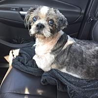 Adopt A Pet :: Mr. Grumpus - Clayton, CA