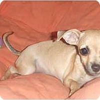 Adopt A Pet :: Lulu - Chimayo, NM