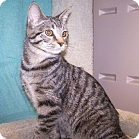Adopt A Pet :: K-Psyche5-Sully - Colorado Springs, CO