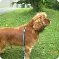 Adopt A Pet :: Cypress - Staunton, VA