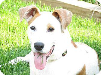 Labrador Retriever Mix Dog for adoption in Ashville, Ohio - Trevor