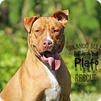 Adopt A Pet :: Plato - Orlando, FL