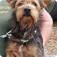 Adopt A Pet :: Peter - Gainesville, FL