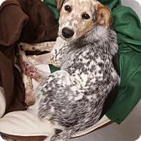 Adopt A Pet :: Ellie May - MEET ME - Norwalk, CT