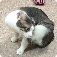 Adopt A Pet :: T.C. - Byron Center, MI
