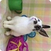 Adopt A Pet :: Ricky - Paramount, CA