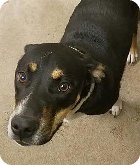 Beagle/Hound (Unknown Type) Mix Dog for adoption in Havelock, North Carolina - Brasi