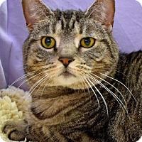 Adopt A Pet :: Calvin - Greenfield, IN