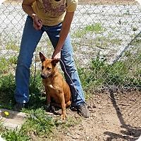 Adopt A Pet :: Pep - Newberry, SC