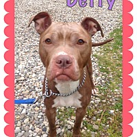 Adopt A Pet :: BETTY - Tinton Falls, NJ