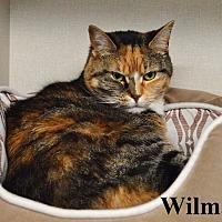 Adopt A Pet :: Wilma - Fryeburg, ME