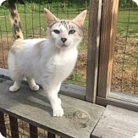 Adopt A Pet :: Gretel - Wasilla, AK