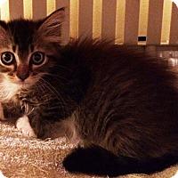 Adopt A Pet :: Kelsey - Metairie, LA