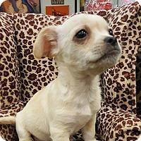 Adopt A Pet :: Moby - Valencia, CA