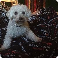 Adopt A Pet :: Pi - AUR, IL