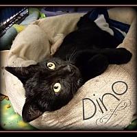 Adopt A Pet :: Dino - Hartford City, IN