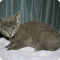 Adopt A Pet :: Cobweb - Santa Rosa, CA