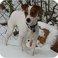 Adopt A Pet :: Buddy - Oklahoma City, OK