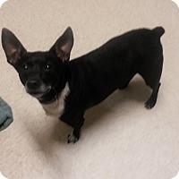 Adopt A Pet :: Gibson - Muskegon, MI