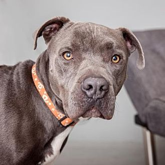 Mixed Breed (Large) Mix Dog for adoption in Mission Hills, California - Vladimir