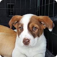 Adopt A Pet :: Jinx - Freeport, NY
