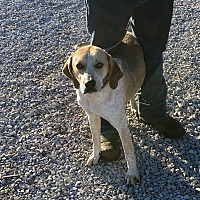 Adopt A Pet :: Brooks - Loogootee, IN