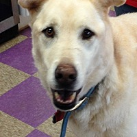 Adopt A Pet :: Teddy - West Columbia, SC