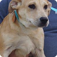Adopt A Pet :: Bernadette - in Maine - kennebunkport, ME