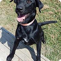 Adopt A Pet :: Shadow - Terrell, TX
