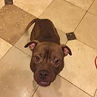 Adopt A Pet :: Ashur - Alpharetta, GA