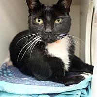 Adopt A Pet :: Irma - Atlanta, GA