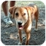 Photo 3 - Labrador Retriever/Terrier (Unknown Type, Small) Mix Dog for adoption in McCormick, South Carolina - Scarlett
