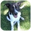 Photo 1 - Border Collie Mix Dog for adoption in Spring Valley, New York - Benji