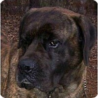 Adopt A Pet :: Titus- North Carolina - Asheboro, NC