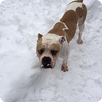 Adopt A Pet :: Lincoln - Killingworth, CT