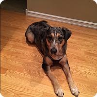Adopt A Pet :: Ollie - Gig Harbor, WA