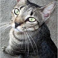 Adopt A Pet :: Sheena FE1-7783 - Thibodaux, LA