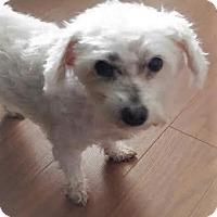 Adopt A Pet :: Bobbie - Mississauga, ON