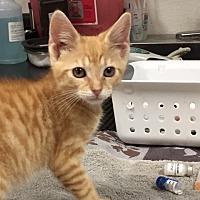Adopt A Pet :: OK - Rincon, GA