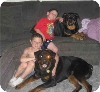 Rottweiler Dog for adoption in Evansville, Indiana - Baby