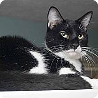 Adopt A Pet :: Scout - New Port Richey, FL