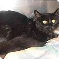 Adopt A Pet :: Rosy - Montreal, QC