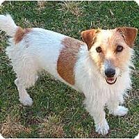 Adopt A Pet :: SHELBY - Phoenix, AZ