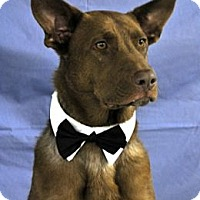 Adopt A Pet :: Rusty - Lockhart, TX
