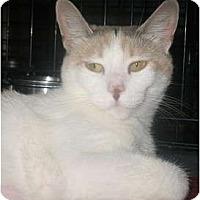 Adopt A Pet :: Molly - Acme, PA