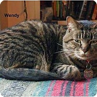 Adopt A Pet :: Wendy - Portland, OR