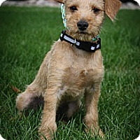 Adopt A Pet :: Melvin - Broomfield, CO