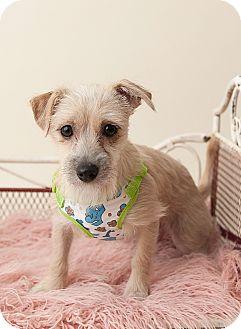 Terrier (Unknown Type, Small) Mix Dog for adoption in Saskatoon, Saskatchewan - Tokay